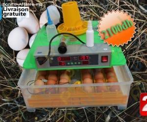 Couveuse automatique 48 oeufs : Economique et facile d'utili