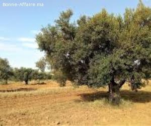 ferme 10 ha en location à marrakech