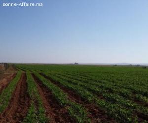 Ferme 27 Hectares Région De Sidi BENNOUR