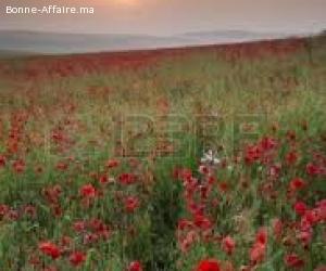 Terrain Agricol a Vendre
