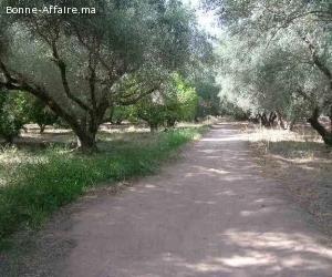 Terrain agricole en bordure de route de Fes