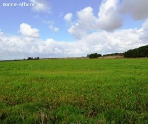 Terrain industriel 4 Ha à vendre Ouled saleh